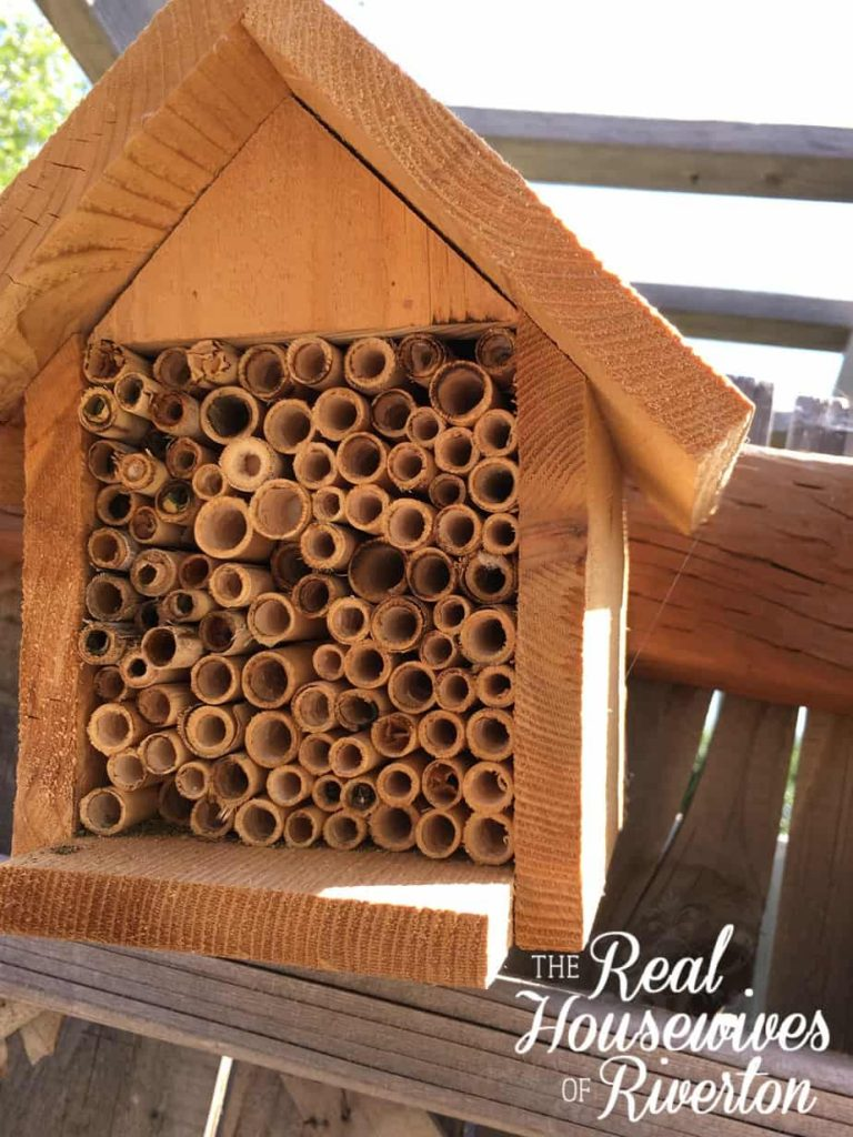 Mason Bees – just what you need to up your gardening game