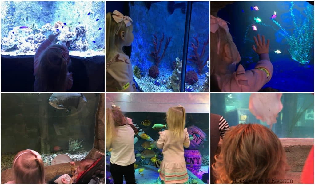 SeaQuest Interactive Aquarium Utah | www.housewivesofriverton.com
